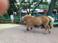 Ponies at the kidszoo